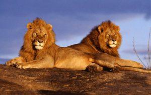 Parc national de Kruger