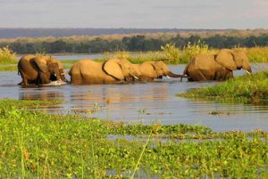 Traversée d'un bras du delta d'Okavango
