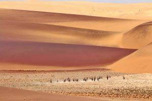 Julie Verbrugge - les dunes rouges du desert