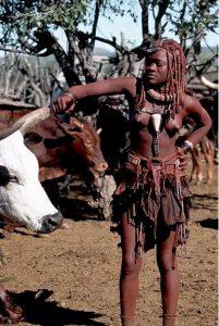 Bétail Himba